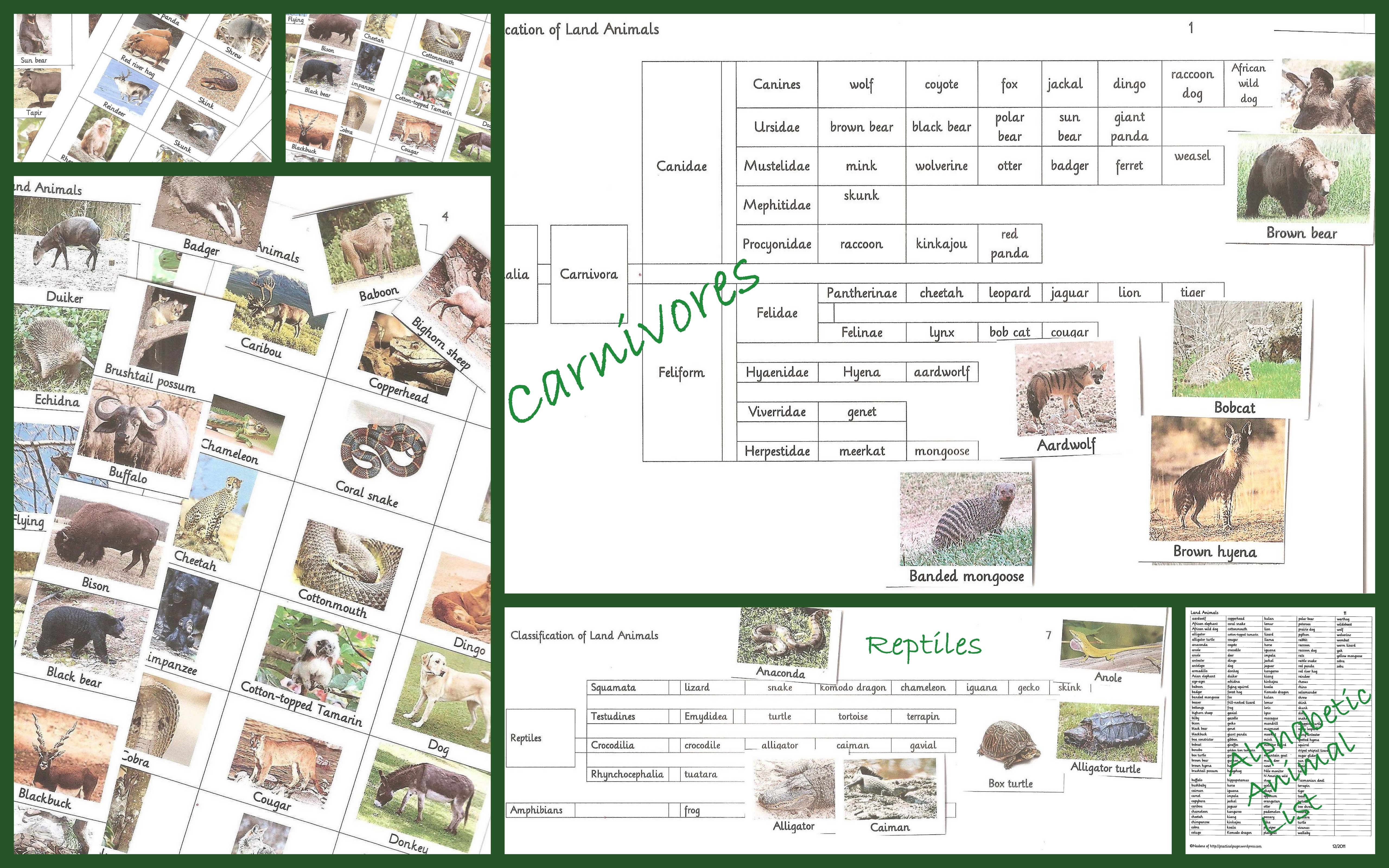 Animal Detective Worksheet Land