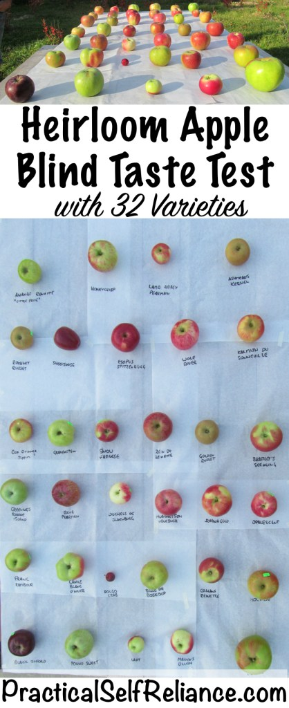 Heirloom Apple Blind Taste Test #apples #applevarieties #heirloomgarden #permaculture #howtogrow #orchard #homesteading #growingfood #trees #gardening #perennial #selfsufficiency #gardeningtips