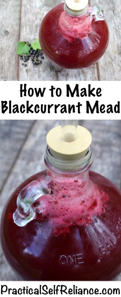 How to Make Blackcurrant Mead #blackcurrant #currant #currantrecipes #berryrecipes #mead #meadrecipe #homebrew #honeywine #fermentation #fermenteddrinks