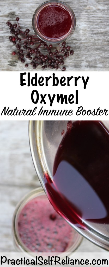 Immune Boosting Elderberry Oxymel - Practical Self Reliance #elderberry #recipe #oxymel #herbalism #immunity #foraging #wildedibles #herbs #herbalist #herbalism #medicine #forage #foraging #wildcrafting #survival #naturalremedy #homestead