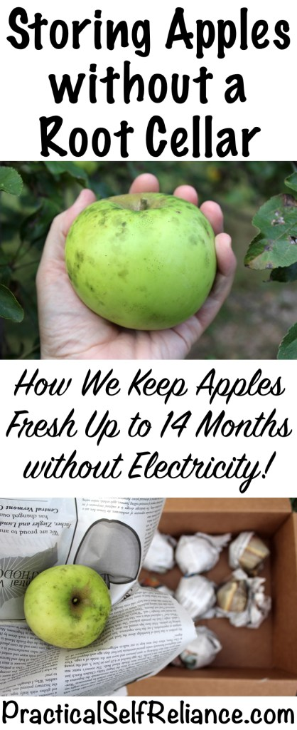 Keep Apples Fresh for Over a Year (without a root cellar) — Practical Self Reliance   #foodstorage #preservingfood #foodpreservation #homestead #homesteading #selfsufficiency #selfreliant #preparedness #apples