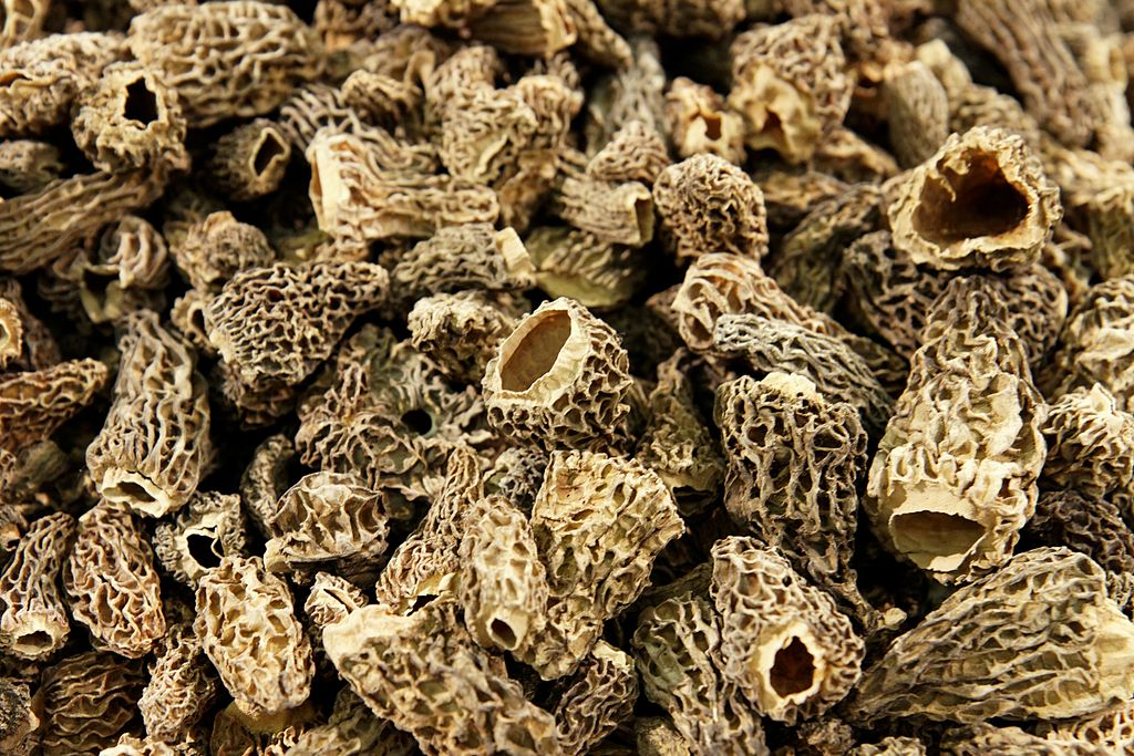 Dried Morel Mushrooms