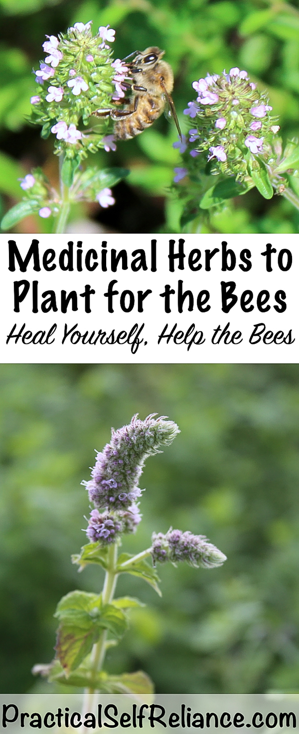 Medicinal Herbs to Plant for the Bees - Heal Yourself, Help the Bees #pollinators #herbs #herbalist #herbalism #medicine #forage #foraging #wildcrafting #survival #naturalremedy #homestead