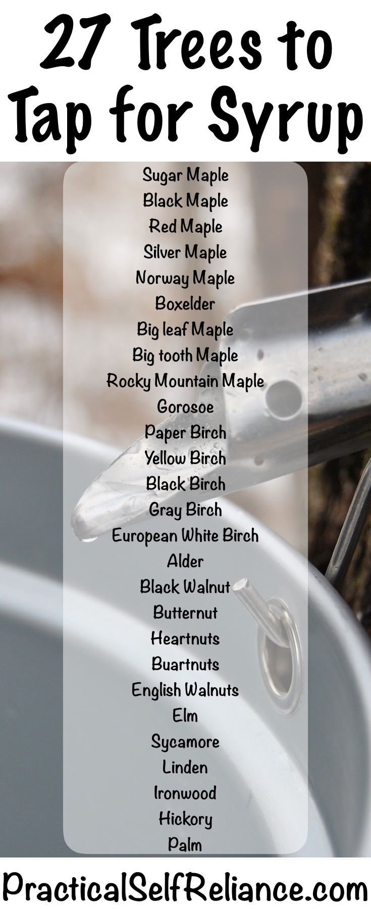 27 Trees You Can Tap for Syrup