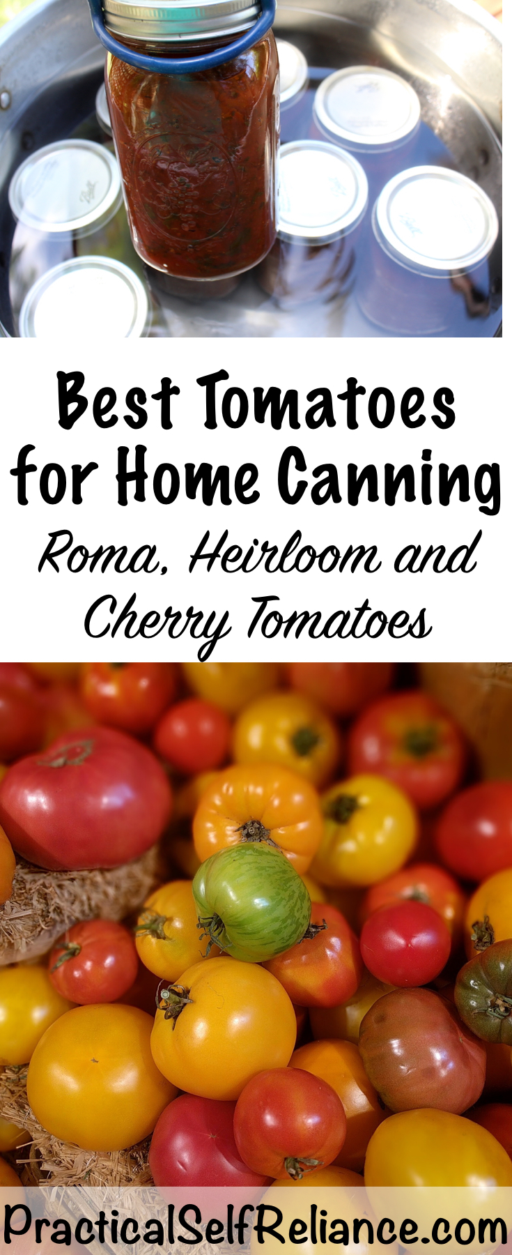 Best Tomatoes for Home Canning #tomatoes #tomatovarieties  #canning #foodpreservation #preservingfood #homestead #selfreliant #selfsufficiency #homesteading #canning #foodpreservation #preservingfood