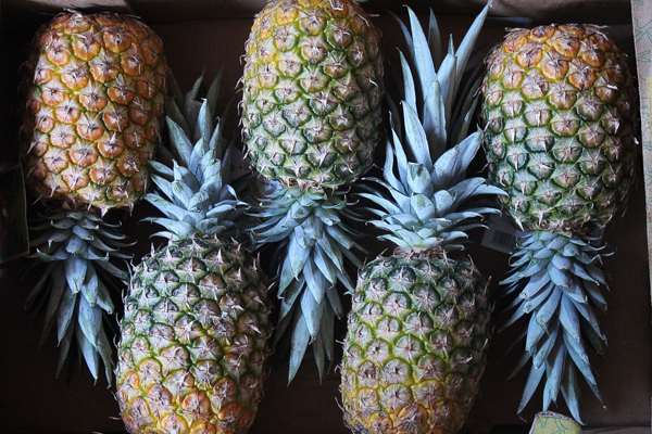 Case of Pineapple for Canning