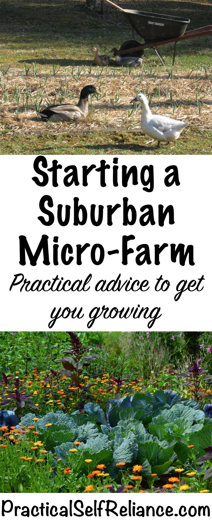 Practical Advice for Starting a Suburban Micro-Farm #gardening #organicgardening #foodgardening #howtogrow #vegetablegardening #gardeningtips #homesteading #urbanfarm #urbanfarming