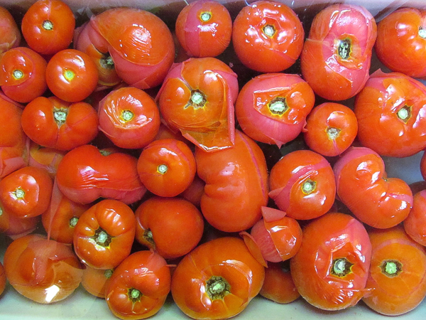 Tomatoes for home canning.