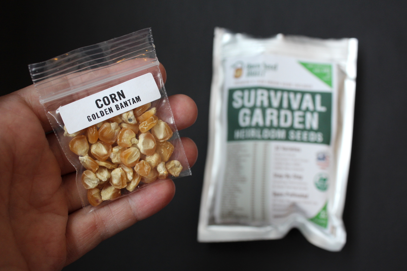 Corn Seeds in Survival Garden