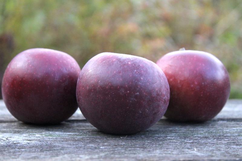 Best Winter Storage Apples