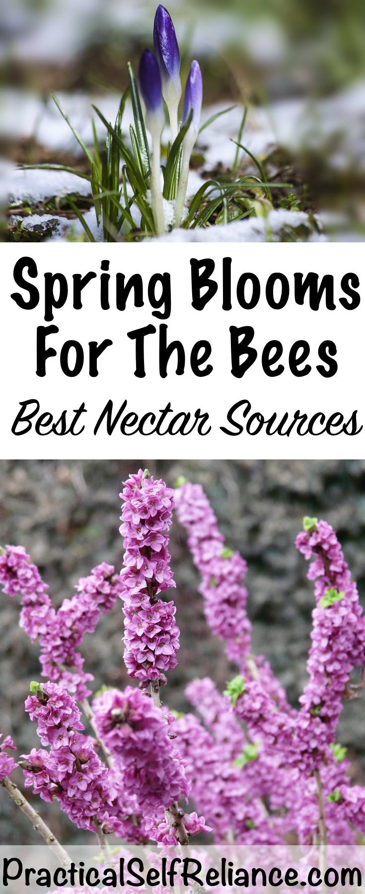 Spring Blooming Flowers for the Bees ~ Planting for Pollinators #growingherbs #springflowers #growingflowers #pollinators #herbs #homesteading #gardening #gardeningtips