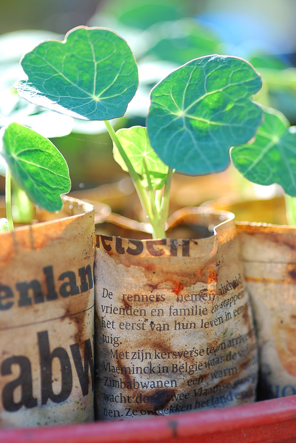 newspaper pots for seed starting