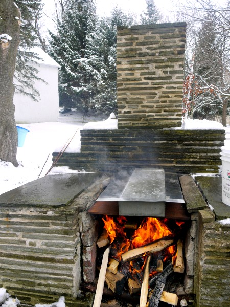 boiling maple sap outdoors for maple syrup