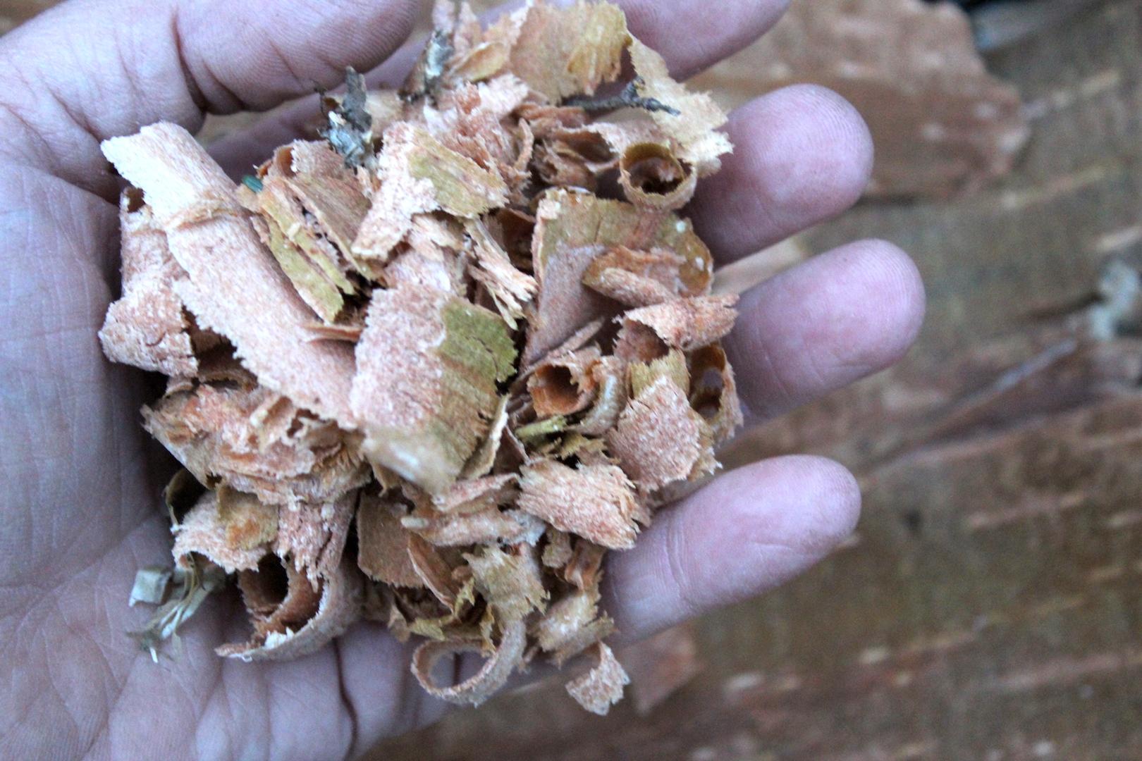 Birch Bark for Flour