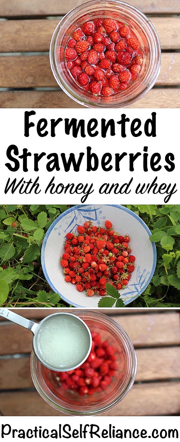 Fermented Strawberries with Honey and Whey ~ Lactofermented Berries #strawberries #strawberryrecipes #realfood #wildstrawberries #probiotics #healthygut #homestead #homesteading #selfreliant