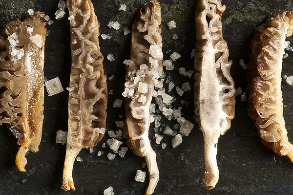 How to Cook Morel Mushrooms