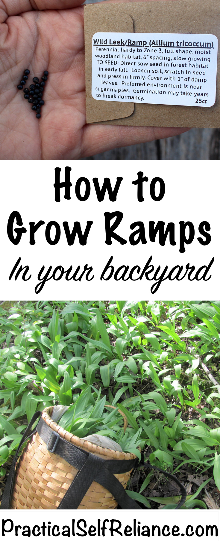 How to Grow Ramps in Your Backyard ~ Grow your own wild leeks #ramps #wildramps #foraging #wildfood #forage #selfsufficiency #wildcrafting #wildleeks #gardening #organicgardening #howtogrow #vegetablegardening #gardeningtips #homesteading #homestead #selfreliant