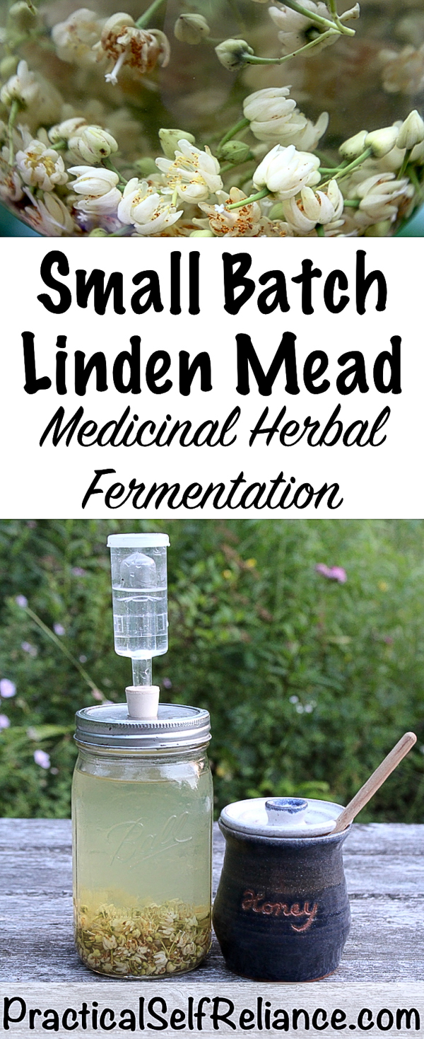 Small Batch Linden Mead ~ Medicinal Herbal Fermentation #linden #lindenflowers #herbs #herbalist #herbalism #mead #meadrecipe #homebrew #honeywine #fermentation #fermenteddrinks