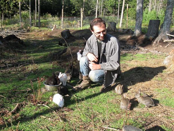 Rabbit Colony on Pasture