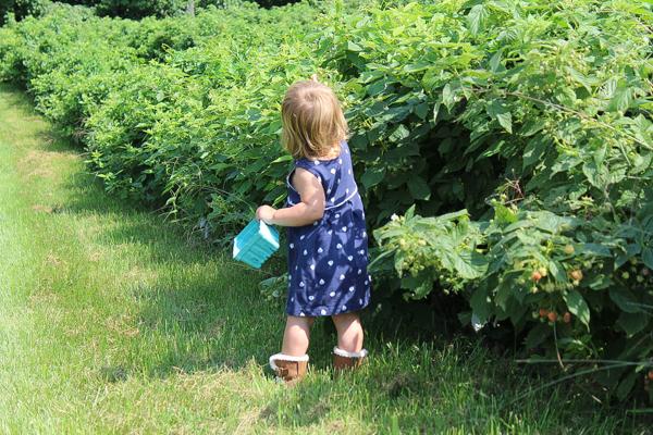 Child Picking Raspberries