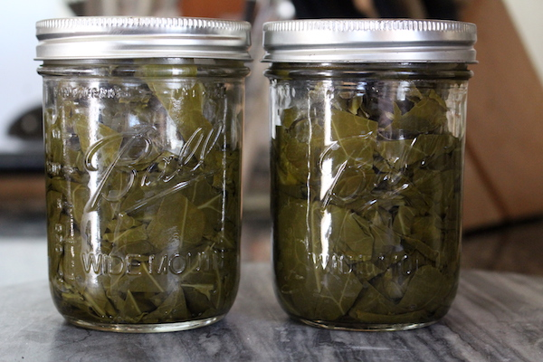 Canning Collard Greens