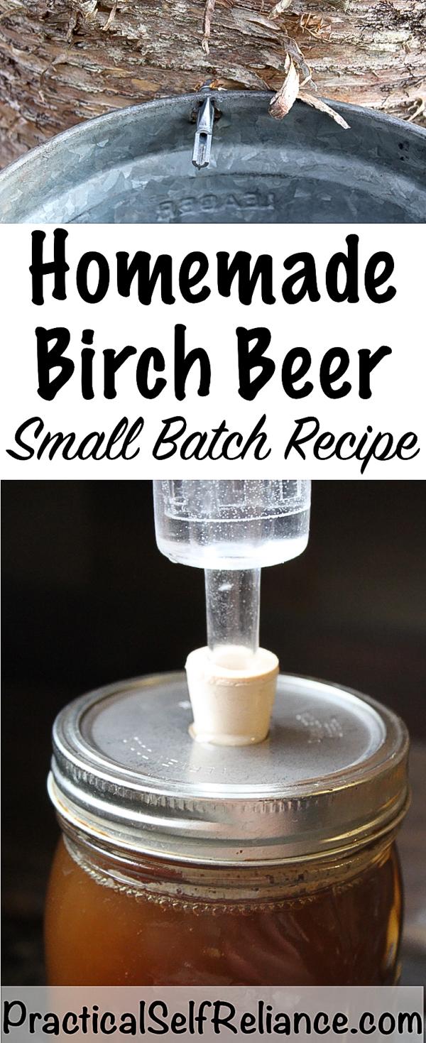 Homemade Birch Beer Recipe #birch #birchtree #forage #foraging #homebrew #homebrewing #beerrecipe