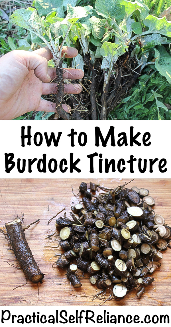 How to Make Burdock Tincture #burdock #burdockroot #tincture #herbs #herbalist #herbalism #medicine #forage #foraging #wildcrafting #survival #naturalremedy #homestead
