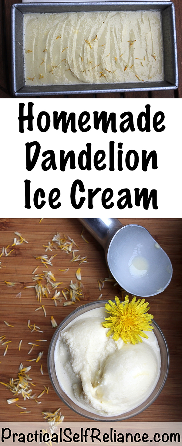 Homemade Dandelion Honey Ice Cream #icecream #icecreamrecipes #dandelion #dandelions #foraging #wildfood #forage #selfsufficiency #wildfood #wildcrafting