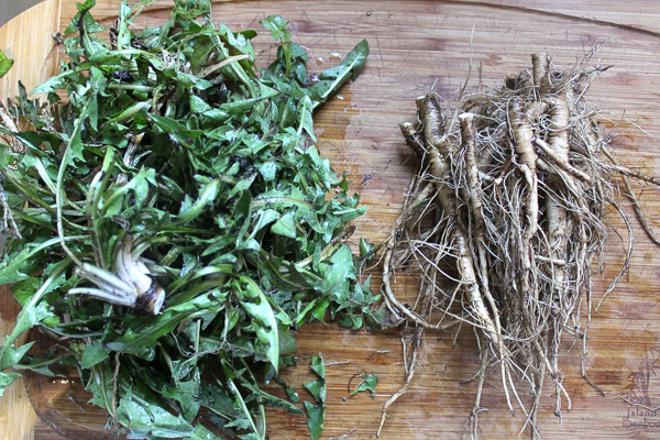 Dandelion roots and greens