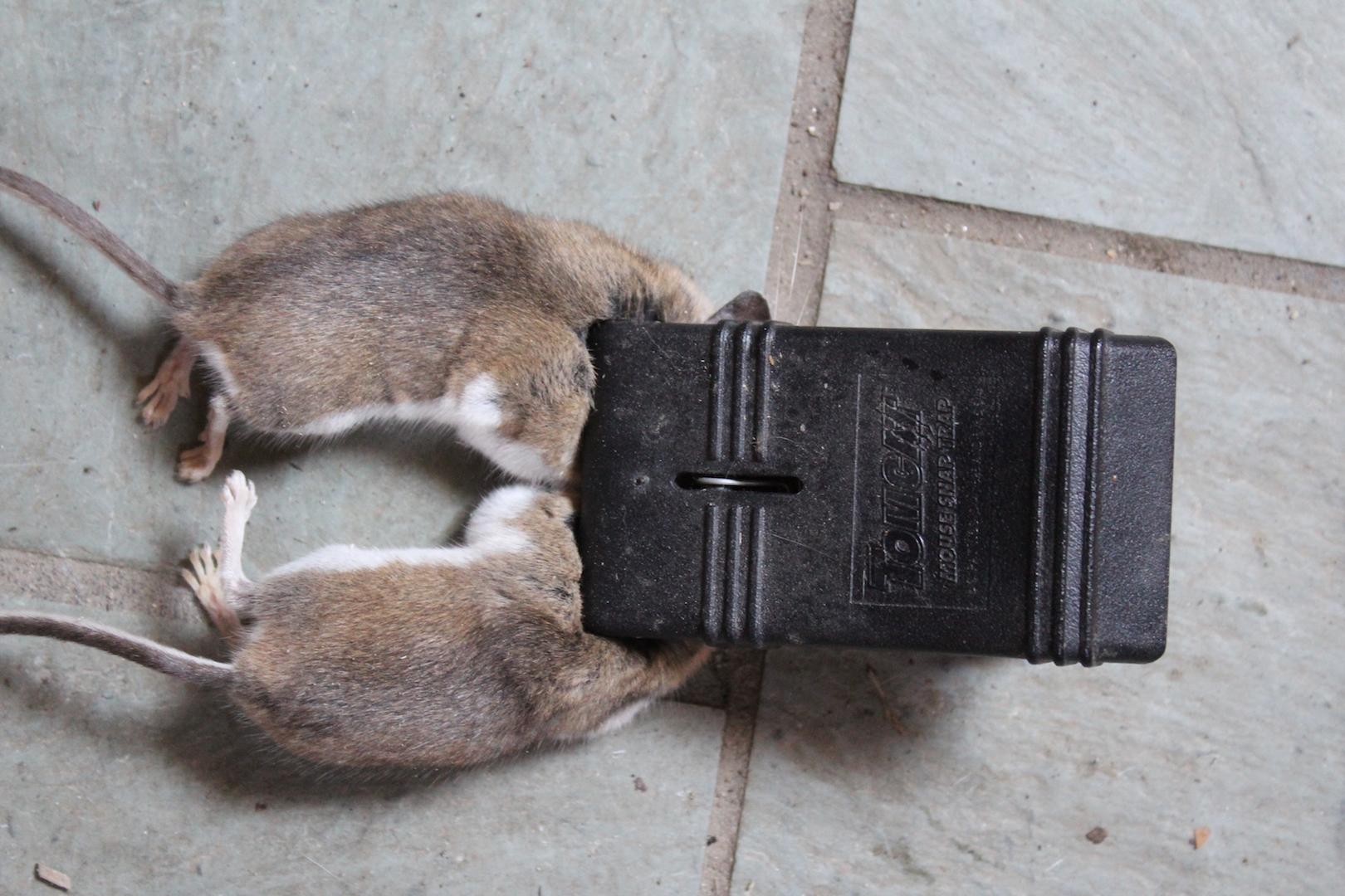 The Best Mousetraps