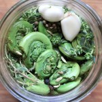 Canning Fiddleheads
