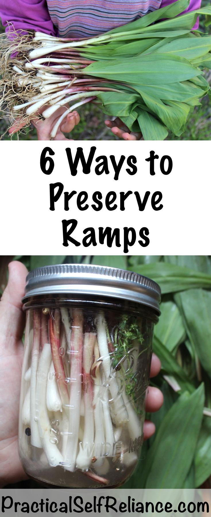 6 Ways to Preserve Ramps (Wild Leeks)