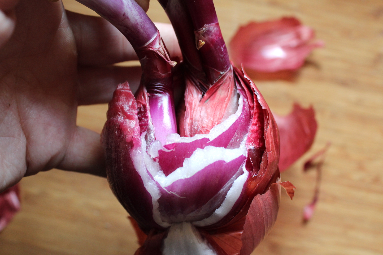 Dividing Sprouted Onions for planting
