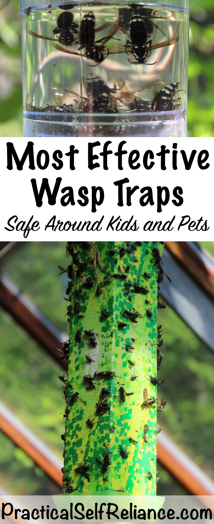 Natural Wasp Traps ~ Safe Around Kids and Pets #wasptrap #wasp #naturalpestcontrol