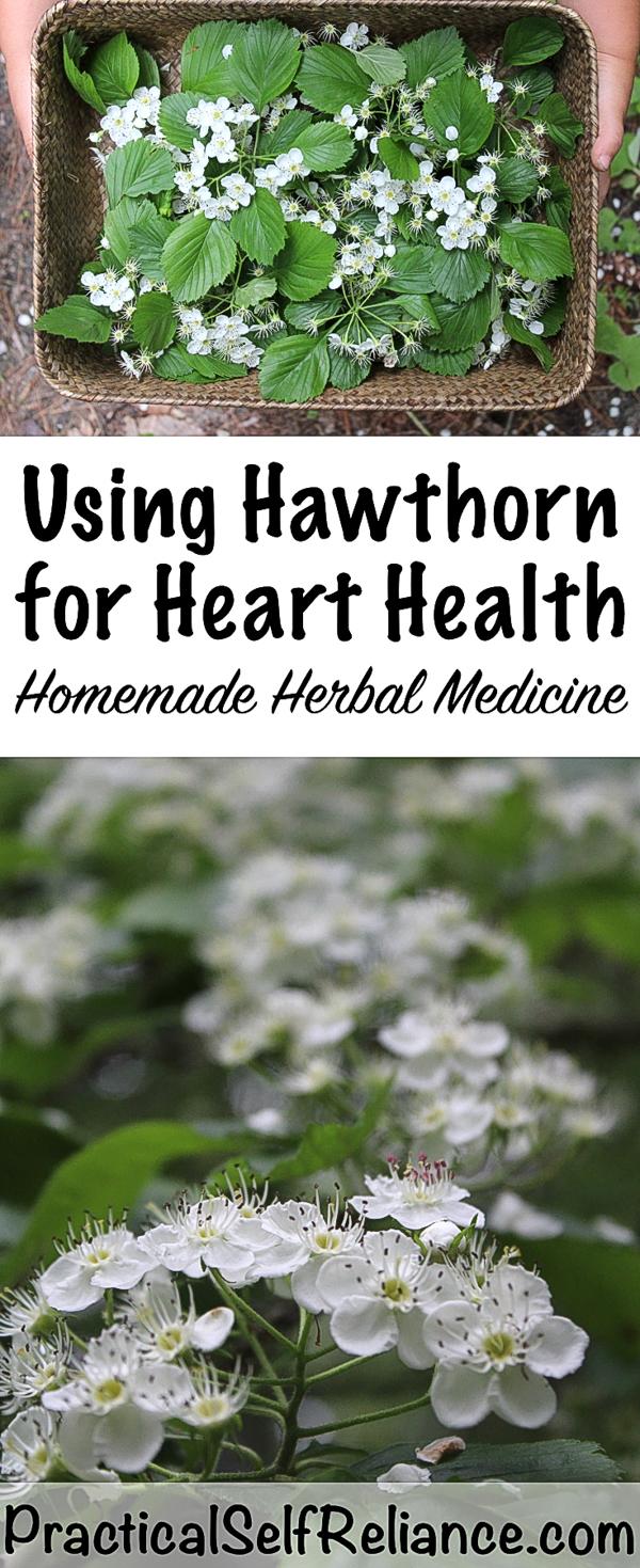 Hawthorn Herbal Medicine #hawthorn #herbalism #herbs #naturalremedy #hearthealth