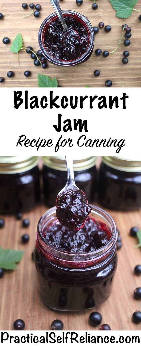 Blackcurrant Jam Recipe for Canning #blackcurrant #currant #jam #jamrecipes #preservingfood #canning #foodpreservation #homesteading #wildfood #foraging