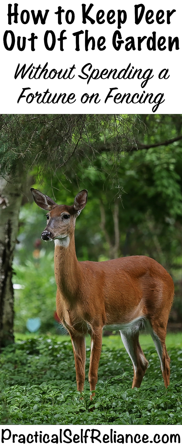 How to Keep Deer Out of the Garden #vegetablegardening #gardening #gardentips #deer #deerproof #homesteading #selfreliant