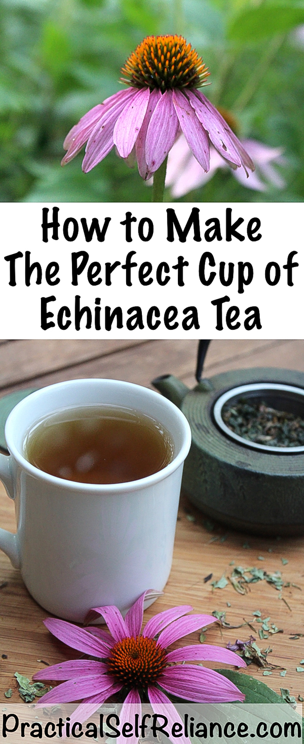 How to Make Echinacea Tea for Immune System Support #echinacea #tea #remedies #tearecipes #herbaltea #herbalism #medicine #coldandflu#immunesystem #teaforhealth