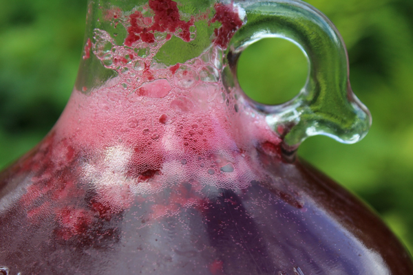 Blackcurrant mead fermentation