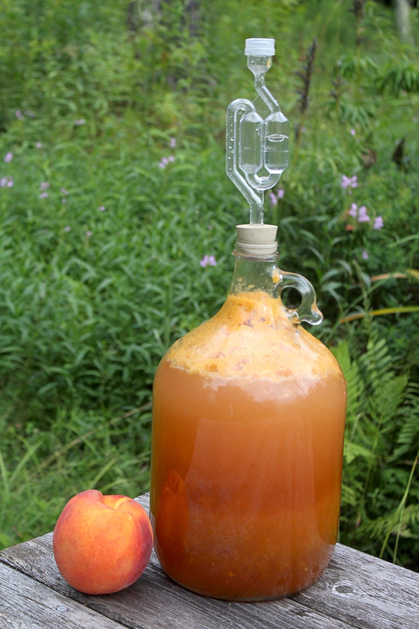 Making peach wine