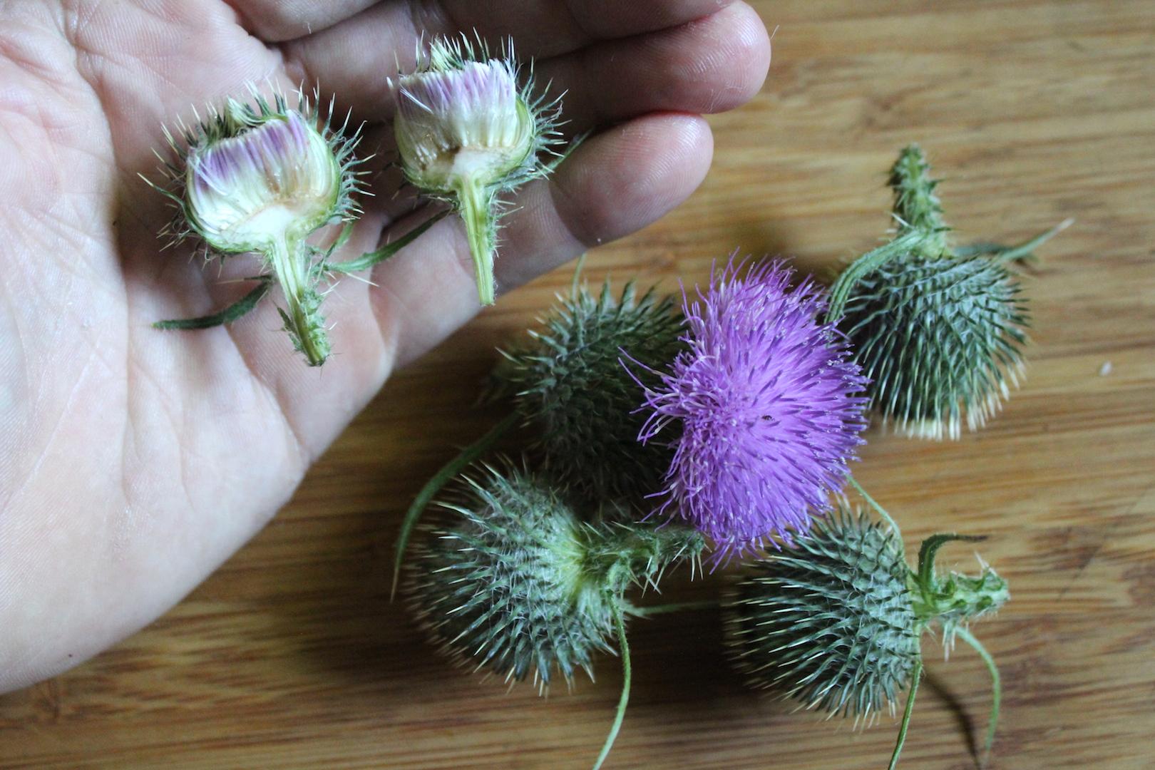 Thistle Flower Inside