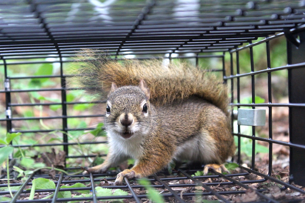 Best Squirrel Traps