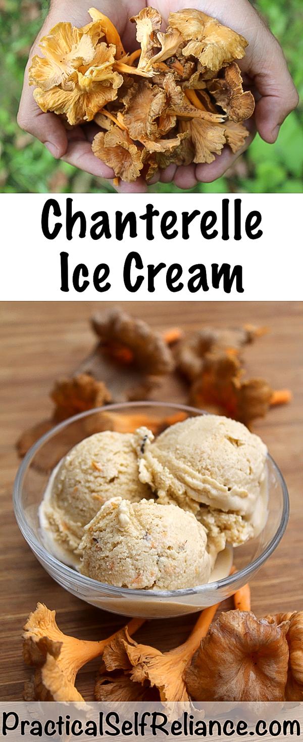 Homemade Chanterelle Ice Cream Recipe ~ Chanterelle Mushroom Ice Cream ~ Chanterelle Dessert Simple #howtocook #chanterellemushrooms #chanterelles #wildfood #foraging #forage #ediblemushrooms #icecream #recipes