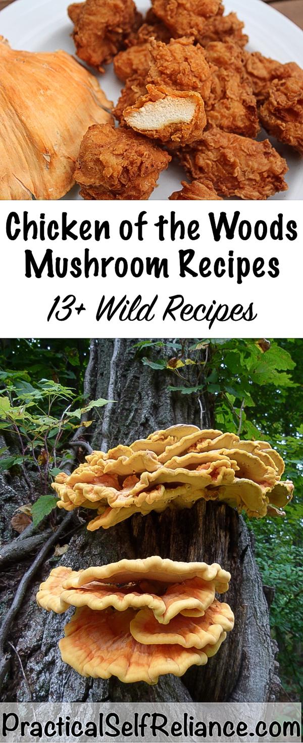 Chicken of the Woods Mushroom Recipes #chickenofthewoods #mushrooms #foraging #wildcrafting #wildedibles #recipes #howtocook #mushroomhunting