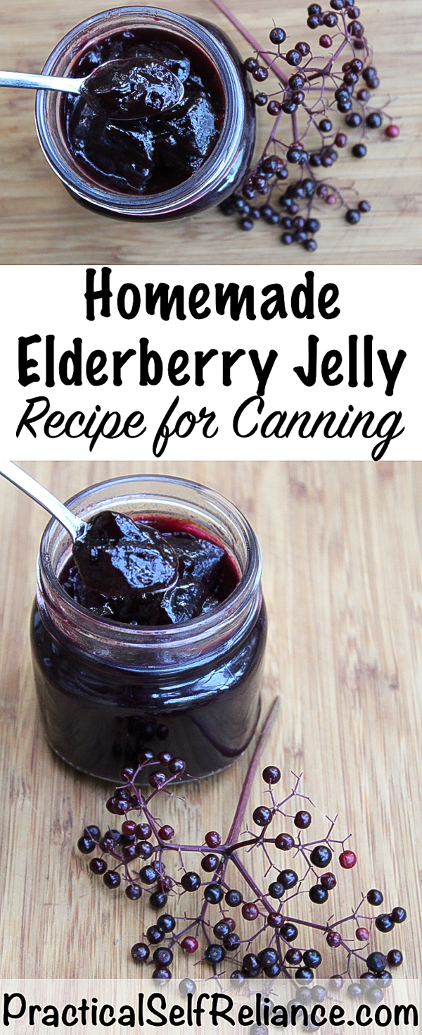 Elderberry Jelly Recipe for Canning #elderberry #recipe #canning #foodpreservation #jellyrecipes #elderberrysyrup #herbalism #foraging #wildcrafting #wildedibles