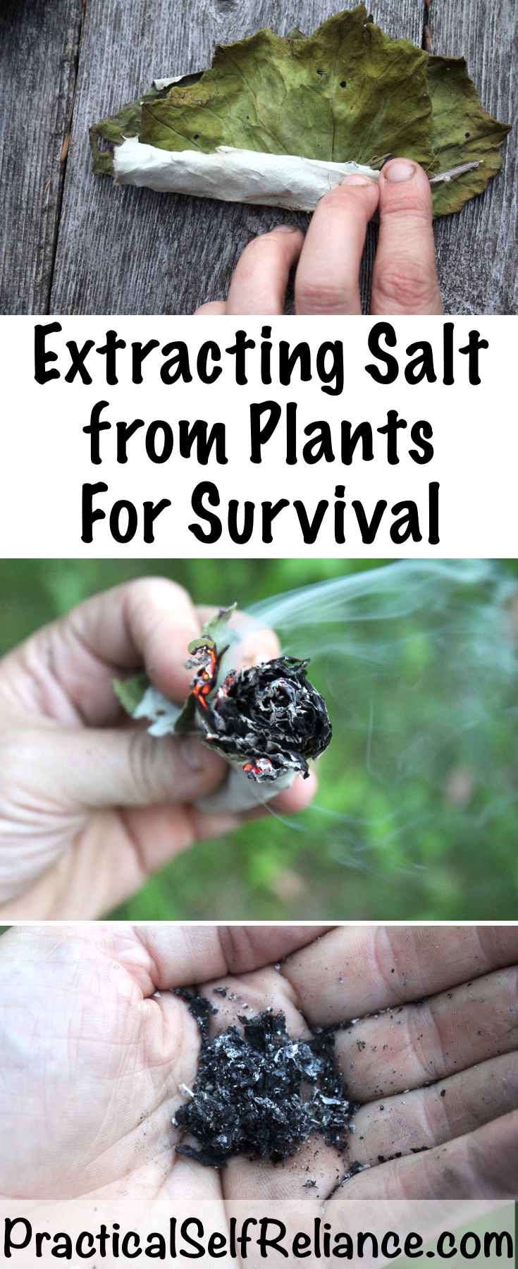 Extracting Salt from Plants for Survival