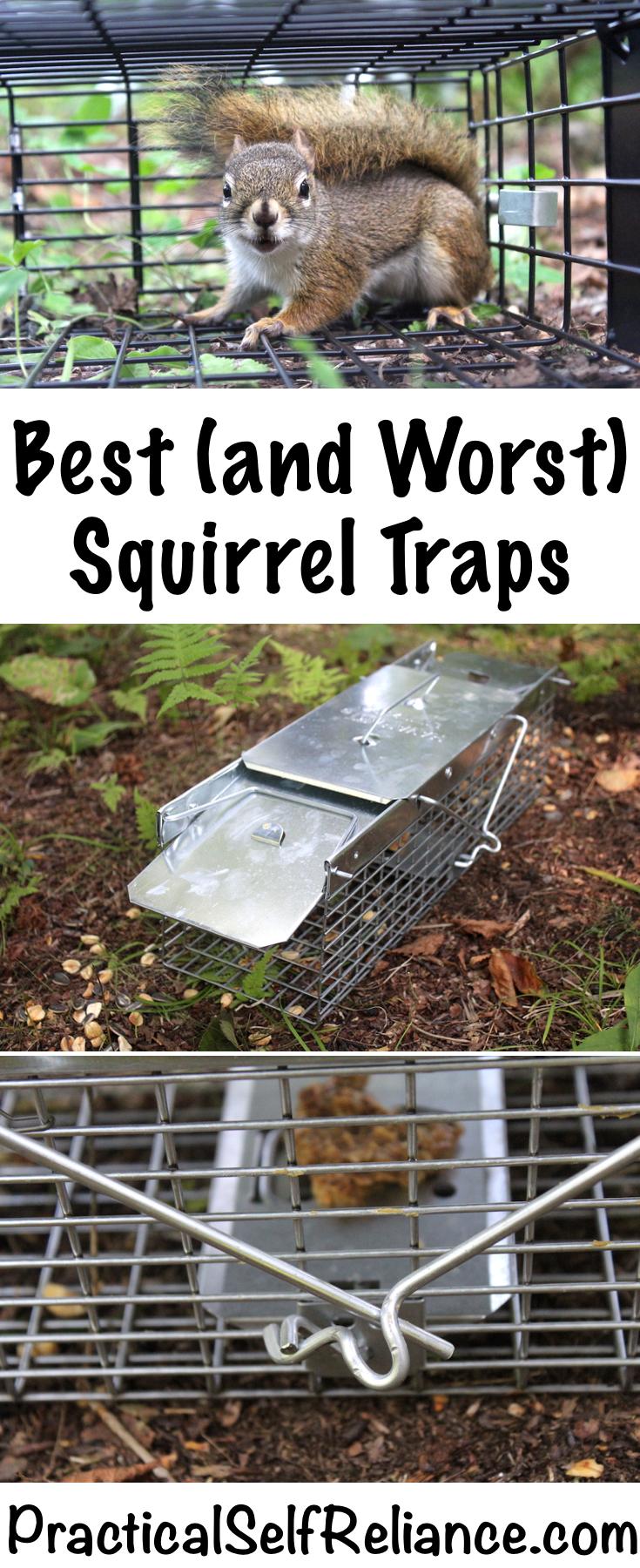 Best Squirrel Traps ~ Best and Worst Squirrel Traps ~ Squirrel Traps that Work #squirrels #gardening #birdwatching #trapping #survival #preparedness #homesteading