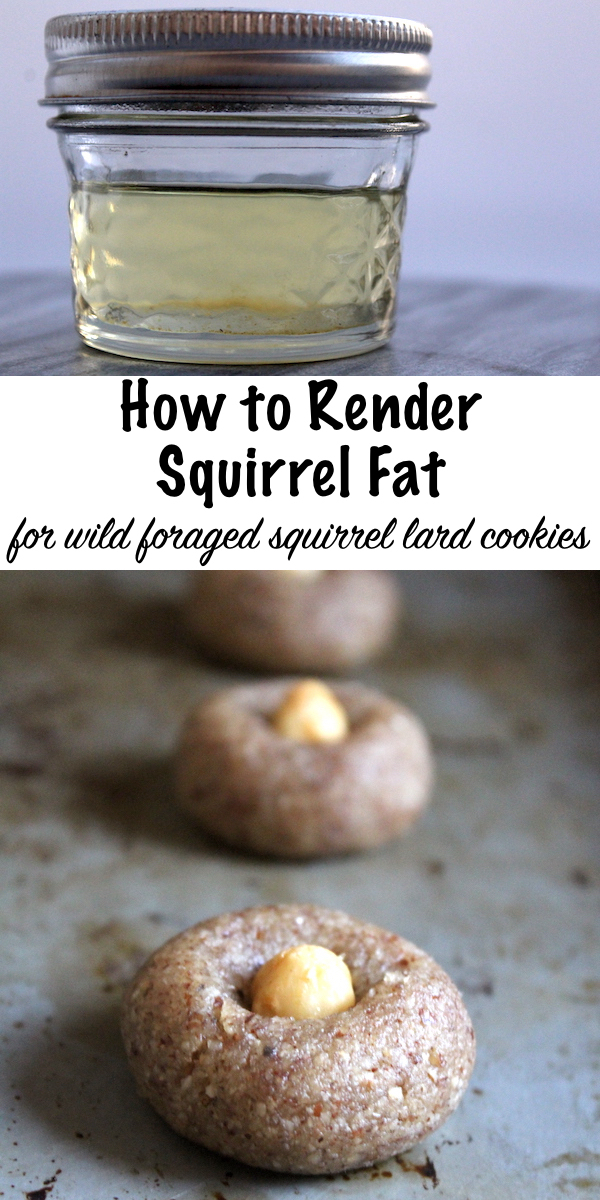 How to Render Squirrel Fat for Cookies ~ Wild Foraged Hazelnut flour Cookies with squirrel fat, quail eggs and maple syrup  #squirrel #recipe #howtocook #wildgame #hunting #survivalist #prepper #homesteading