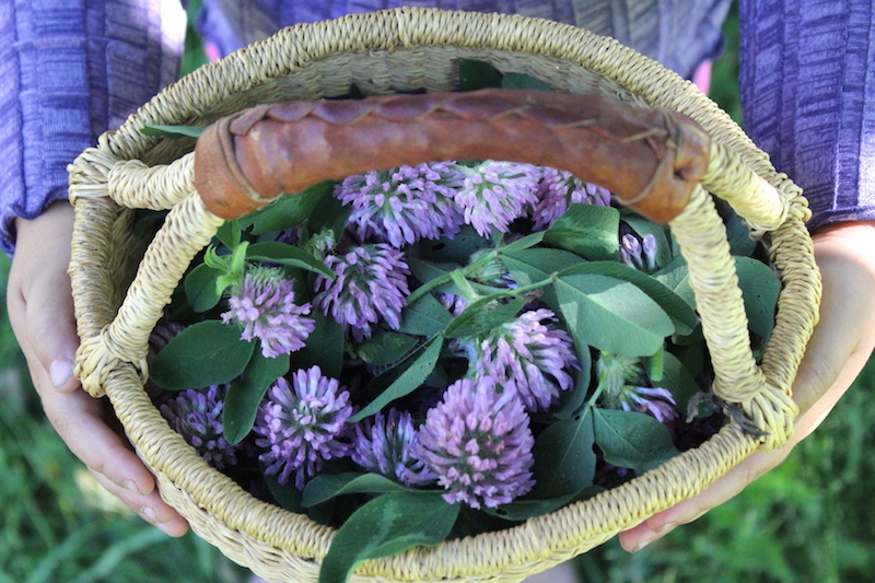 Basket of Red Clover