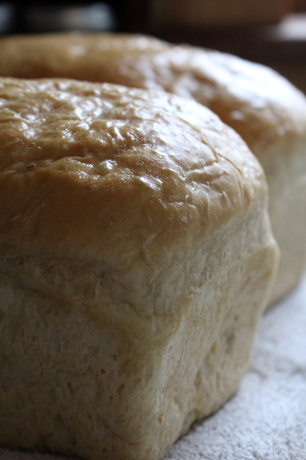 Buttery Soft crust on amish white bread (amish milk bread)